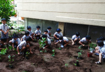 Tree Plantation-Jr.KG