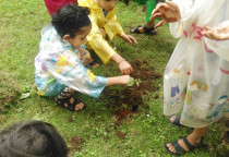 Tree Plantation(Jr.KG)