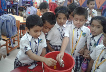 Sink & Float Activity(Sr.KG)