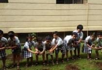 Tree Plantation(Sr.Kg)