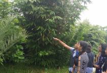 Visit To A Botanical Garden -Grade XI
